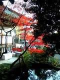 Jindaiji5